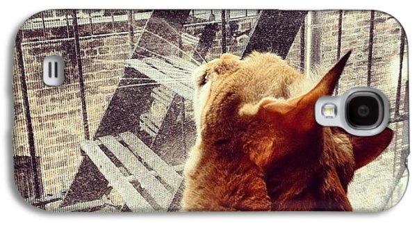 Orange Galaxy S4 Case - City Cat And Fire Escapes by Vivienne Gucwa