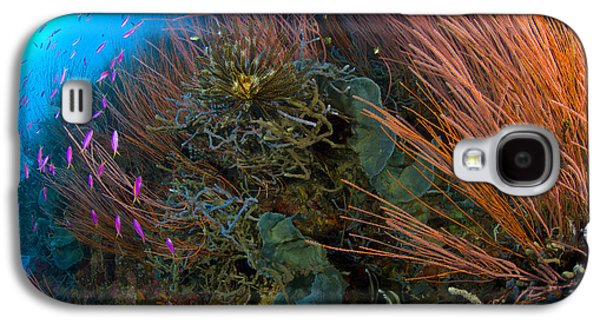 Colony Of Red Whip Fan Coral With Fish Galaxy S4 Case