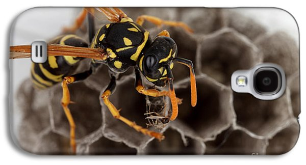 Common Wasp Galaxy S4 Case by Ted Kinsman