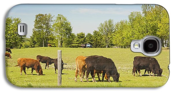 Maine Meadow Galaxy S4 Cases - Cows Grazing On Grass In Maine Farm Field Spring Galaxy S4 Case by Keith Webber Jr