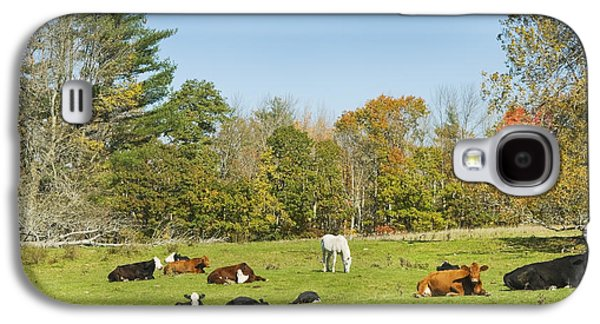 Cows Laying On Grass In Farm Field Autumn Maine Galaxy S4 Case by Keith Webber Jr