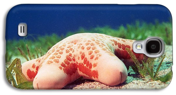 Cushion Star (choriaster Granulatus) Galaxy S4 Case by Georgette Douwma