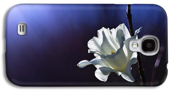 Daffodil Light Galaxy S4 Case by Lori Coleman