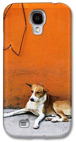 Dog Near Colorful Wall In Mexican Village Galaxy S4 Case by Elena Elisseeva