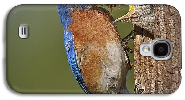 Eastern Bluebird Feeding Chick Galaxy S4 Case by Susan Candelario