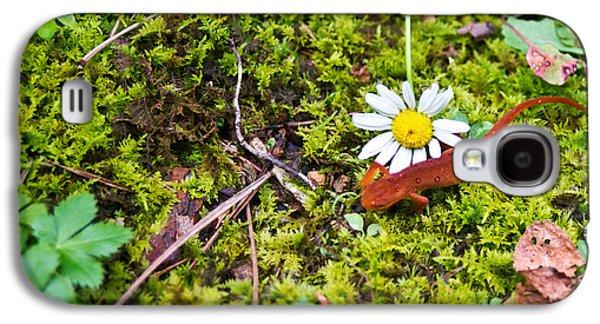 Newts Galaxy S4 Case - Eastern Newt Juvenile 3 by Douglas Barnett