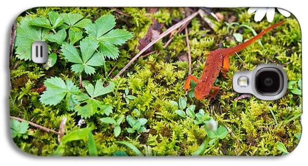 Newts Galaxy S4 Case - Eastern Newt Juvenile 4 by Douglas Barnett