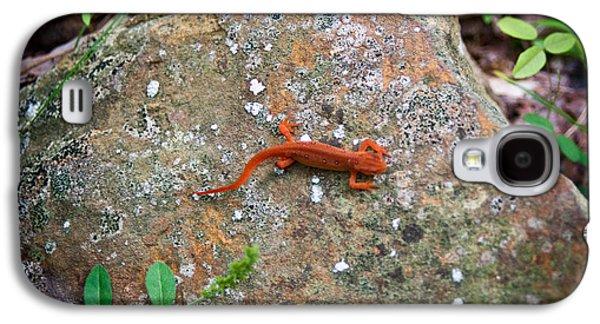 Newts Galaxy S4 Case - Eastern Newt Juvenile 6 by Douglas Barnett