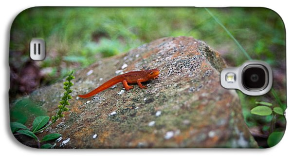 Newts Galaxy S4 Case - Eastern Newt Juvenile 7 by Douglas Barnett