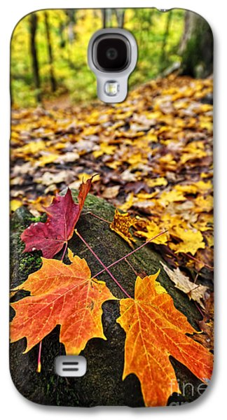 Fall Leaves In Forest Galaxy S4 Case