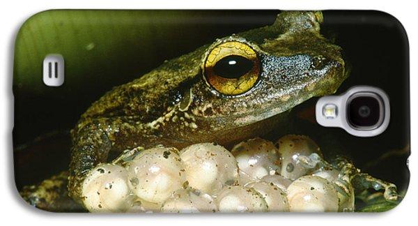 Frog Guarding His Eggs Galaxy S4 Case by Dante Fenolio