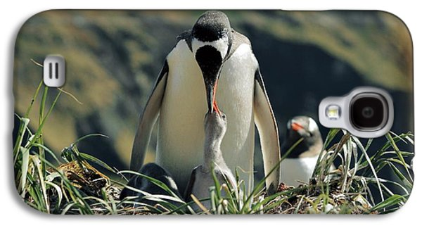Gentoo Penguin Feeding Chick Galaxy S4 Case by Charlotte Main