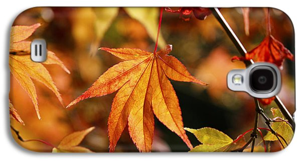 Golden Fall. Galaxy S4 Case by Clare Bambers