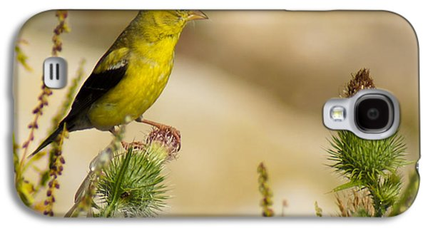 Goldfinch On Lookout Galaxy S4 Case