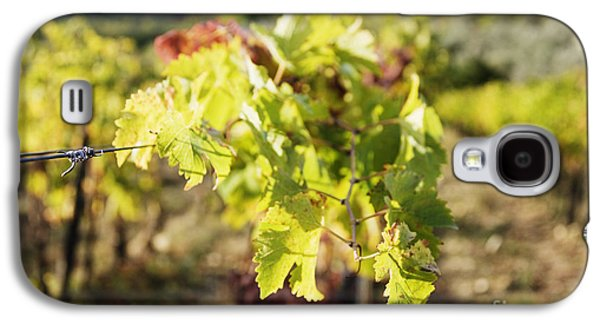 Grape Leaves Galaxy S4 Case by Jeremy Woodhouse