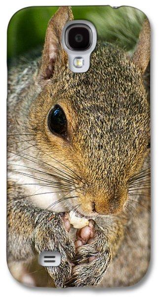 Gray Squirrel Galaxy S4 Case