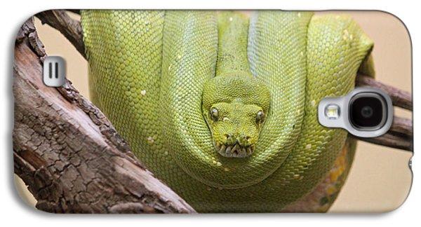 Green Tree Python Galaxy S4 Case by Suzanne Gaff