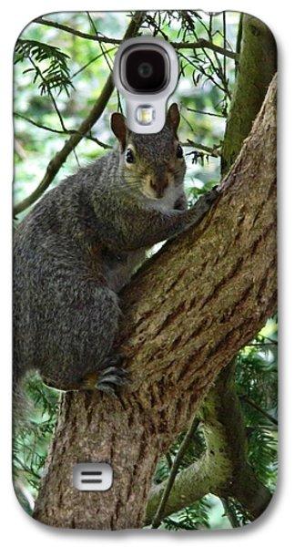 Grey Squirrel Galaxy S4 Case by Sharon Lisa Clarke