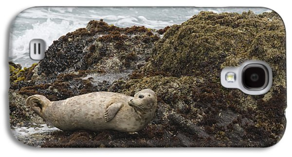 Harbor Seal  Point Lobos State Reserve Galaxy S4 Case