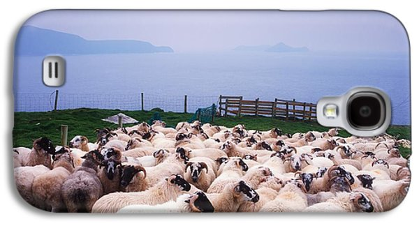 Herding Sheep, Inishtooskert, Blasket Galaxy S4 Case by The Irish Image Collection