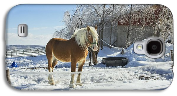 Horse On Maine Farm After Snow And Ice Storm Photograph Galaxy S4 Case