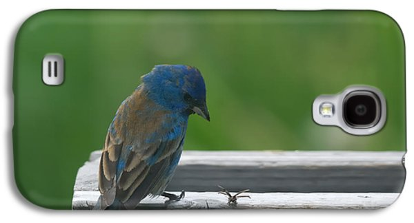Bunting Galaxy S4 Case - Indigo Bunting And Friend by Susan Capuano