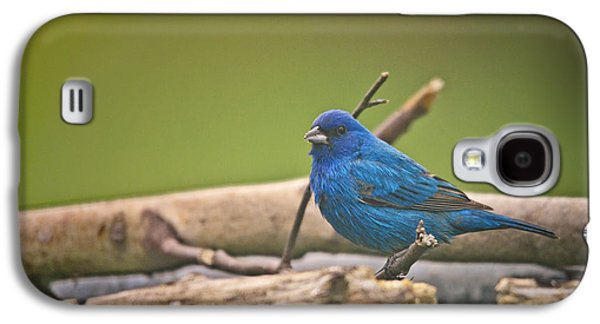 Bunting Galaxy S4 Case - Indigo Bunting by Susan Capuano
