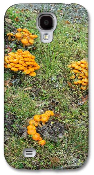 Jack Olantern Mushrooms 15 Galaxy S4 Case by Douglas Barnett