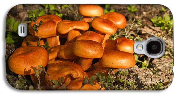 Jack Olantern Mushrooms 24 Galaxy S4 Case by Douglas Barnett
