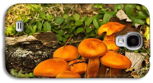 Jack Olantern Mushrooms 32 Galaxy S4 Case by Douglas Barnett