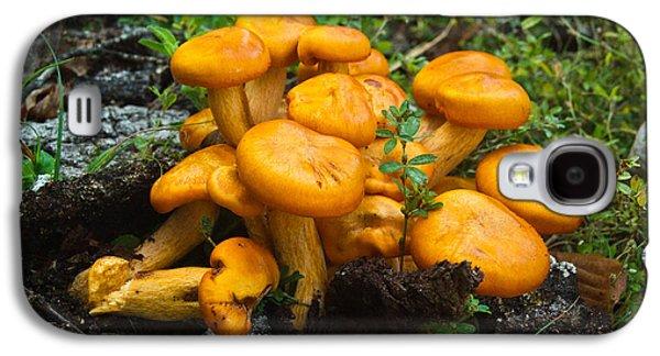 Jack Olantern Mushrooms 4 Galaxy S4 Case by Douglas Barnett