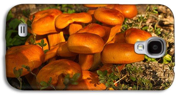 Jack Olantern Mushrooms 5 Galaxy S4 Case by Douglas Barnett