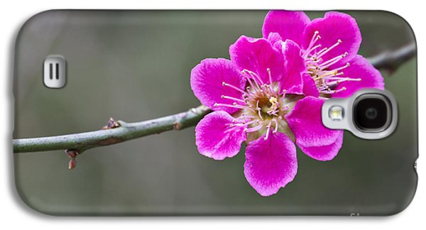 Japanese Flowering Apricot. Galaxy S4 Case by Clare Bambers
