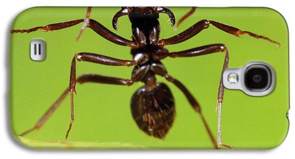 Japanese Slave-making Ant Polyergus Galaxy S4 Case by Satoshi Kuribayashi