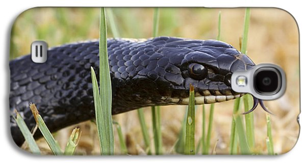 Wild Racers Galaxy S4 Case - Large Whipsnake Coluber Jugularis by Alon Meir