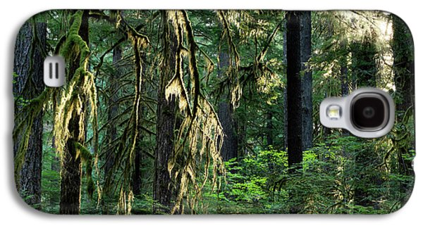 Lighting The Forest Galaxy S4 Case