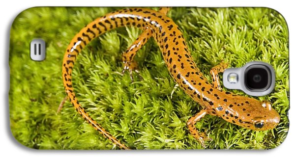 Longtail Salamander Eurycea Longicauda Galaxy S4 Case by Jack Goldfarb