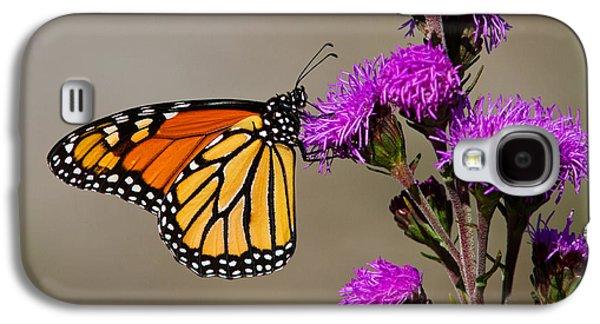 Monarch Galaxy S4 Case by Mircea Costina Photography