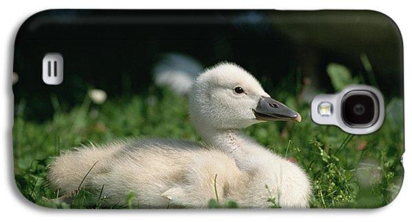 Mute Swan Cygnus Olor Chick, Germany Galaxy S4 Case by Konrad Wothe