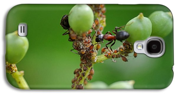 Ant Galaxy S4 Case - Mutualistic by Susan Capuano