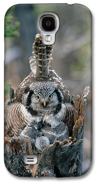 Northern Hawk Owl Surnia Ulula Parent Galaxy S4 Case by Michael Quinton