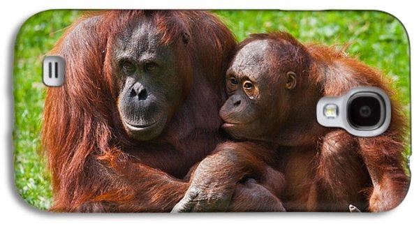 Feeding Young Galaxy S4 Case - Orangutan Mother And Child by Gabriela Insuratelu