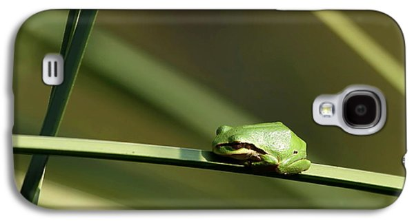 Pacific Tree Frog Galaxy S4 Case by Angie Vogel