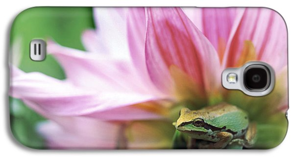 Pacific Tree Frog In A Dahlia Flower Galaxy S4 Case by David Nunuk