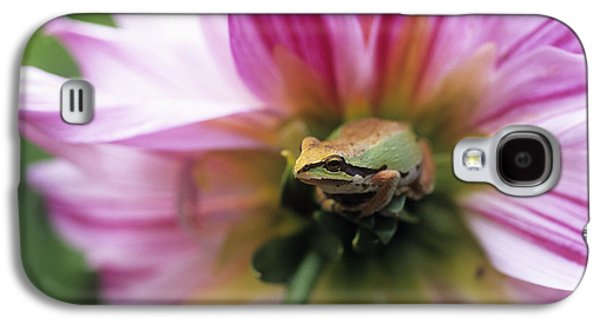 Pacific Treefrog On A Dahlia Flower Galaxy S4 Case by David Nunuk