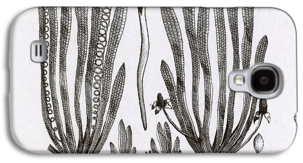 Page From Darwins Botanic Garden Galaxy S4 Case