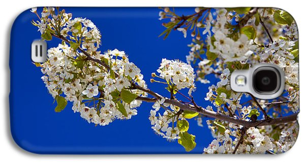 Pear Spring Galaxy S4 Case
