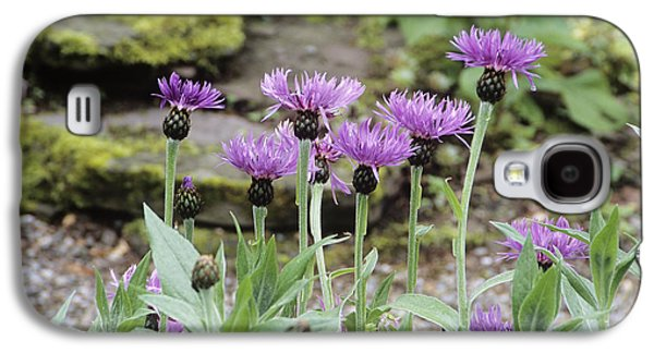 Perennial Cornflowers 'parham' Galaxy S4 Case by Archie Young