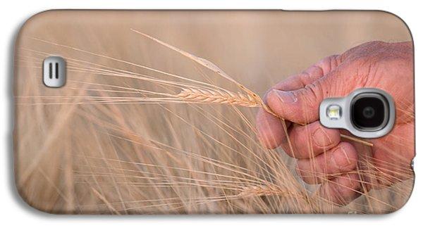 Ready To Harvest Galaxy S4 Case by Cindy Singleton