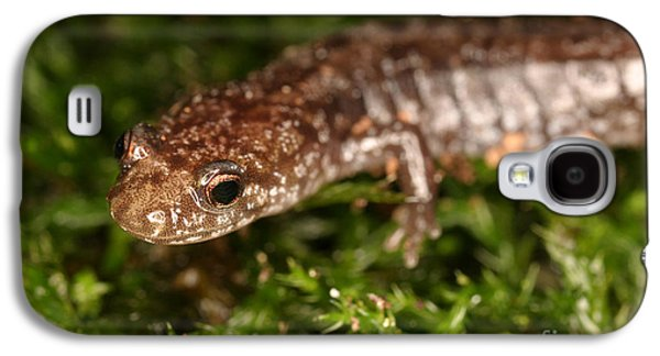 Red-backed Salamander Galaxy S4 Case by Ted Kinsman